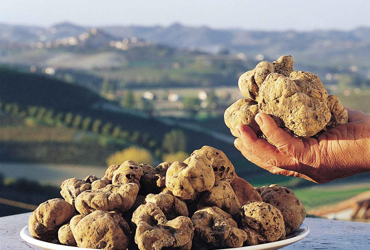 Truffle Istria story